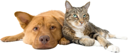 Dog and cat at Moscar Kennels and Cattery, Sheffield