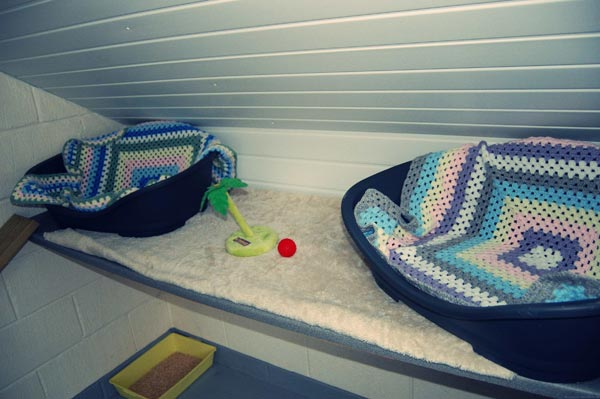 A double room in the cattery
